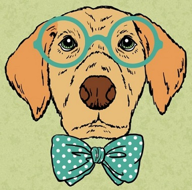 Os 10 Cachorros Mais Inteligentes do Mundo