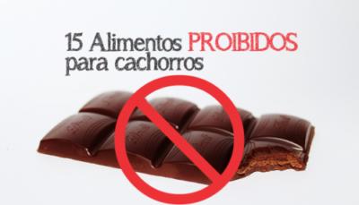 alimentos proibidos para cachorros
