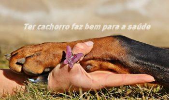 Cachorro faz bem para saúde