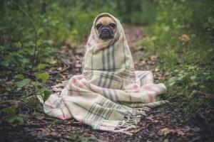 cachorros sentem frio