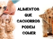 alimentos que cachorros podem comer
