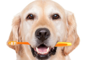 como evitar mau halito muito forte do cachorro