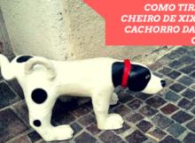 COMO TIRAR O CHEIRO DE XIXI DE CACHORRO DA SUA CASA