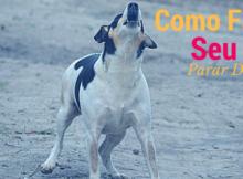 Como Fazer Seu Cão Parar de Latir