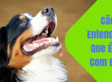 Cães entendem o que é dito com eles