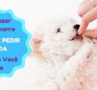 Como Fazer Seu Cão Parar de Pedir Comida Enquanto você come
