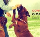 como ensinar cachorro dar a pata