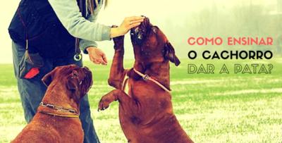 Como Ensinar Cachorro Dar a Pata?