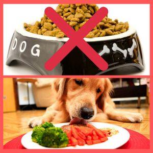 pode-dar-comida-caseira-para-cachorro